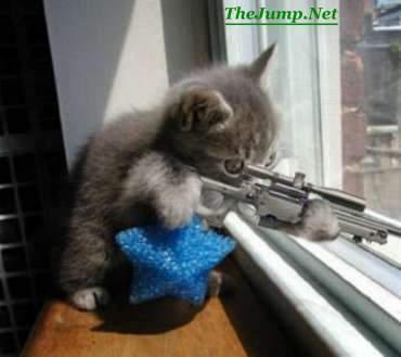 KittenSniper